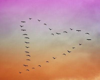 Bird group flying in a heart shape